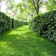 Живая изгородь – надежная и красивая ограда для дачного участка